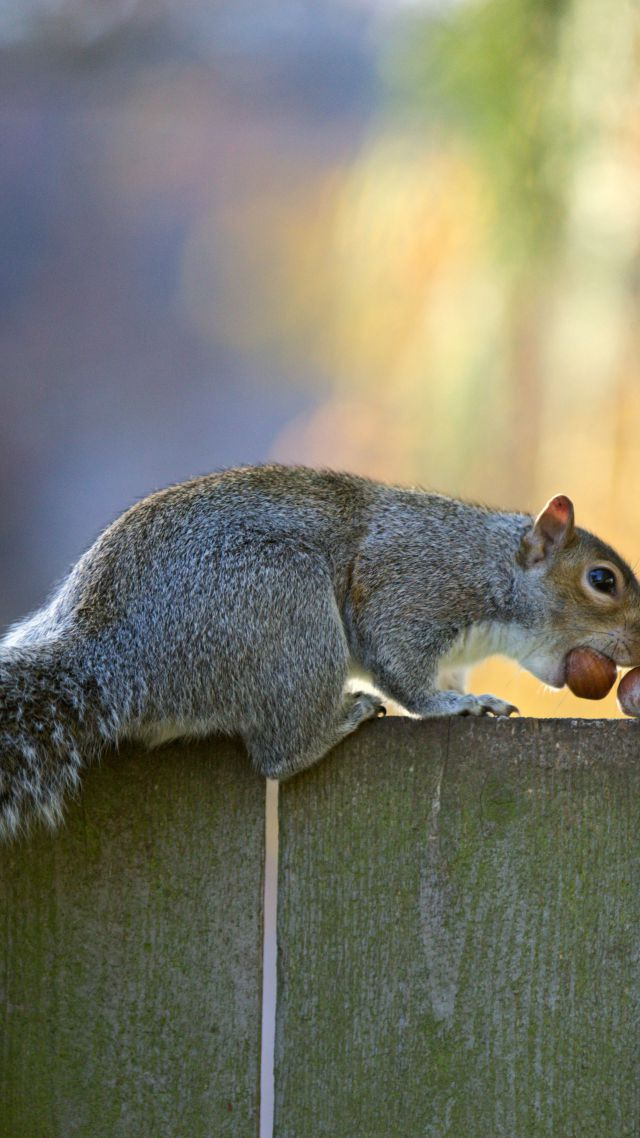 Squirrel, cute animals, funny (vertical)