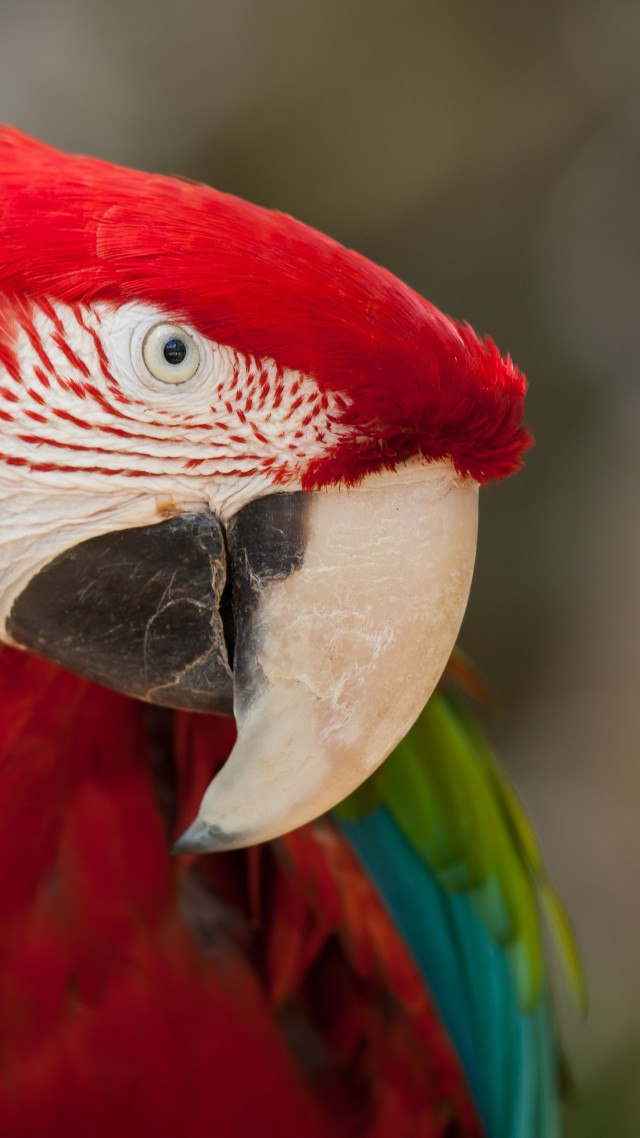 Macaw, parrot, cute animals (vertical)