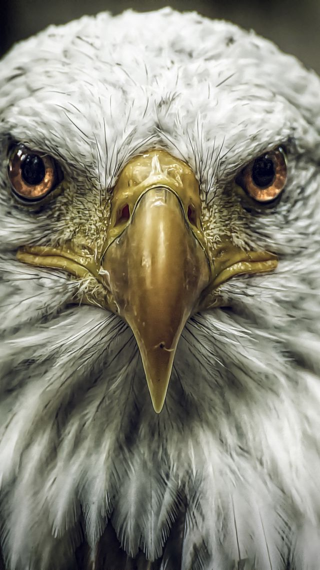 Wallpaper Eagle Look Cute Animals Blur Animals 4519