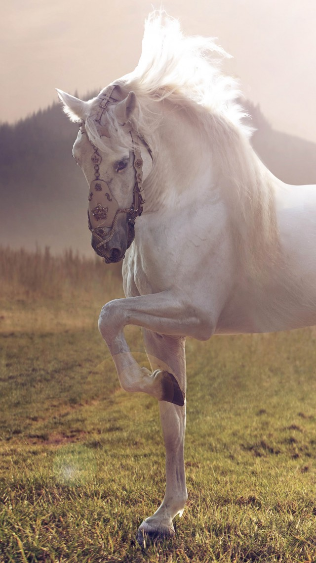 Horse, cute animals, sunset (vertical)