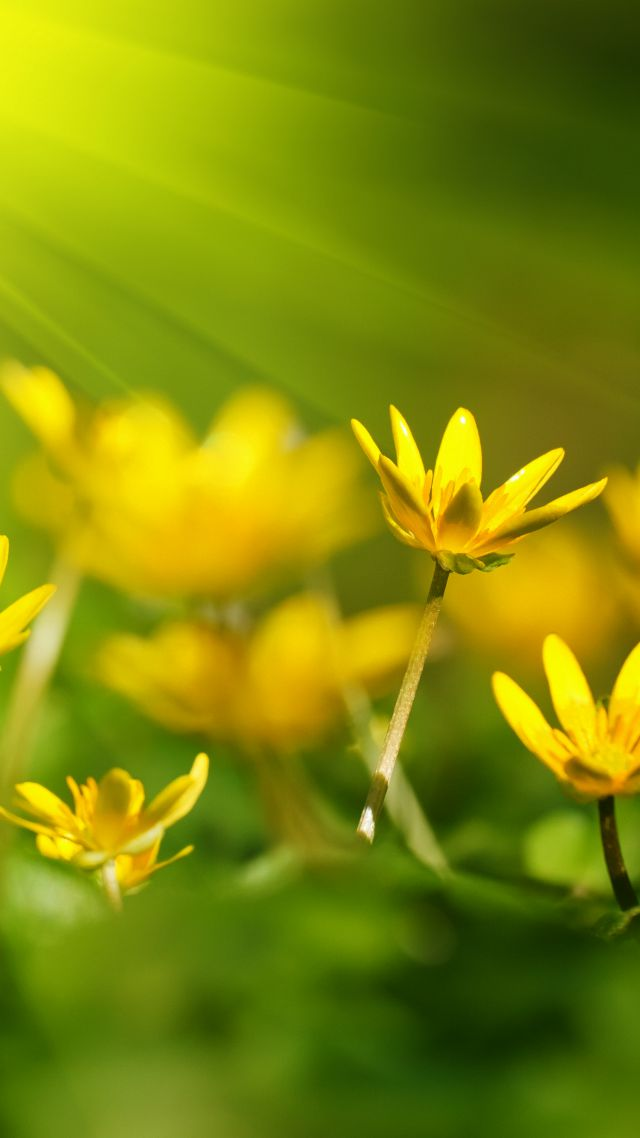 Flowers, 5k, 4k wallpaper, 8k, sunray, yellow, green grass (vertical)