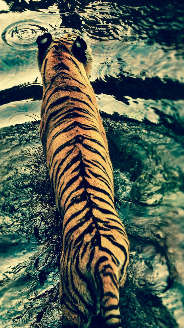 Tiger, water, cute animals (vertical)