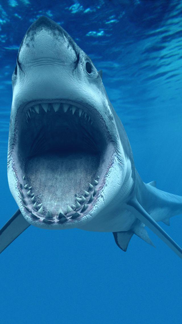 Wallpaper Shark Underwater Best Diving Sites Animals 4683