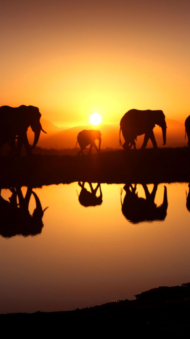 Elephant, sunset, water (vertical)