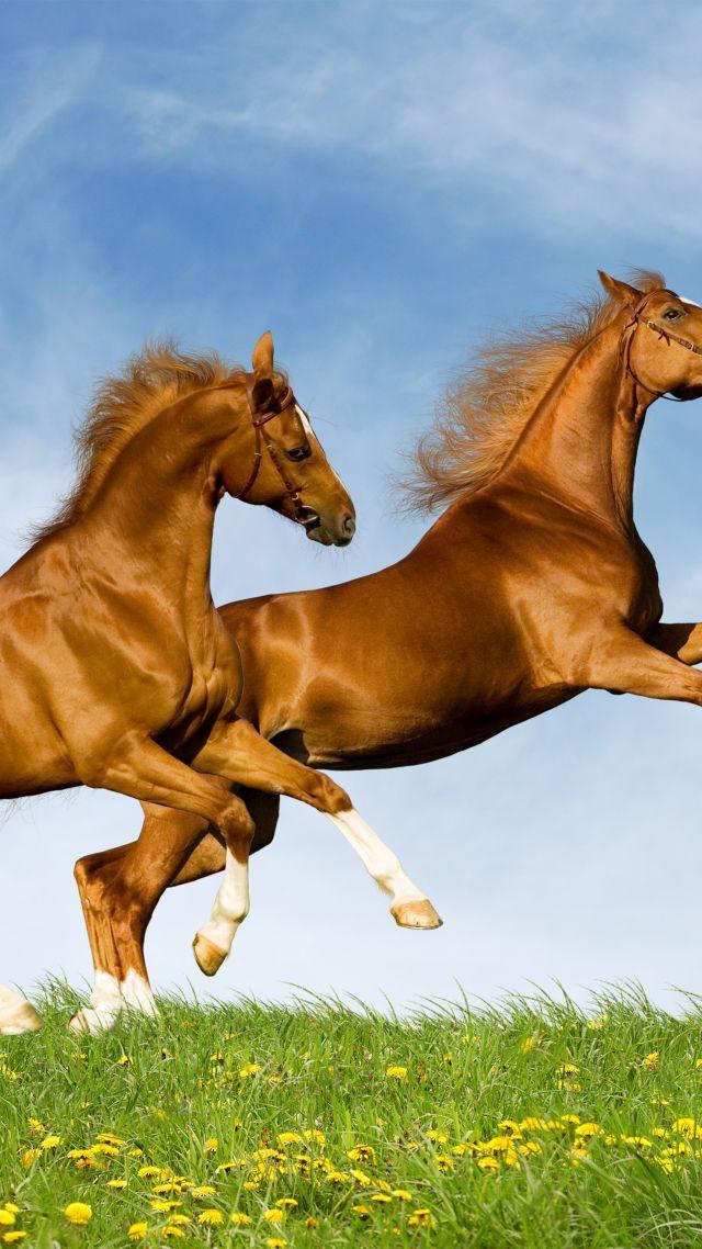 Horse Gallop Couple Sky Vertical