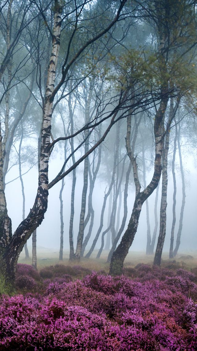 Stanton Moor, 5k, 4k wallpaper, 8k, Peak District, UK, Forest, wildflowers, fog (vertical)