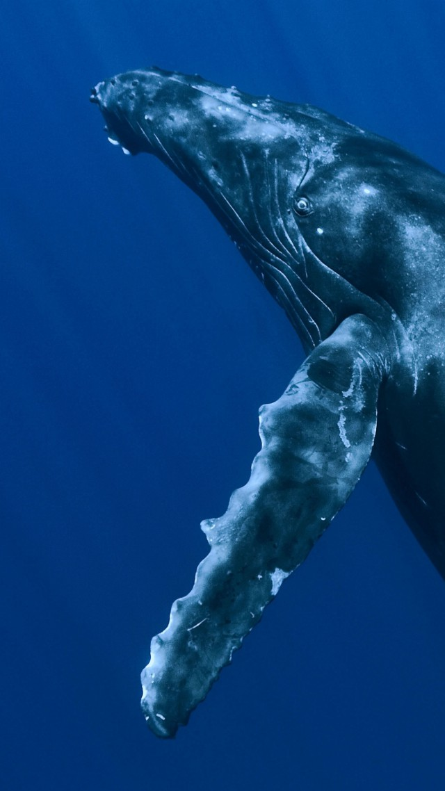Whale, underwater, Best Diving Sites (vertical)