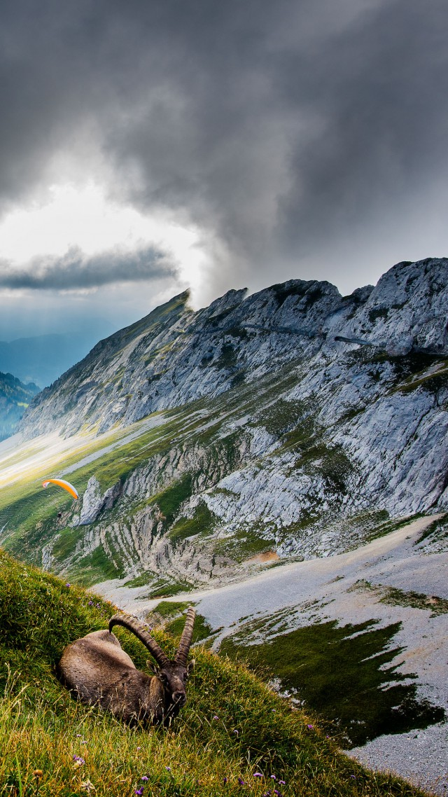 Mount Pilatus, 5k, 4k wallpaper, Switzerland, Mountains, meadows, goat, clouds (vertical)