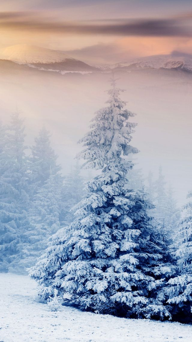 Wallpaper Trees 5k 4k Wallpaper Pines Mountains Snow