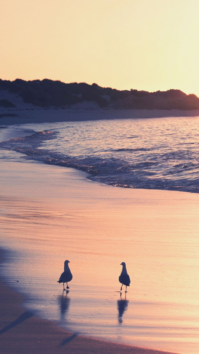 Ocean, 5k, 4k wallpaper, sea, sunrise, shore, seagull, beach (vertical)