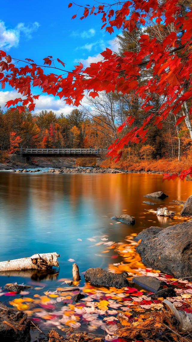 autumn forest, leaves, trees, lake, rocks, beach, bridge, sky, clouds