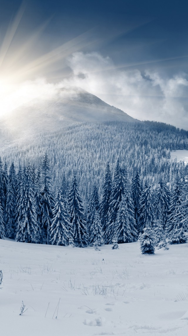Wallpaper Winter Forest 5k 4k Wallpaper Mountain Sun Snow Fir Trees Nature 579