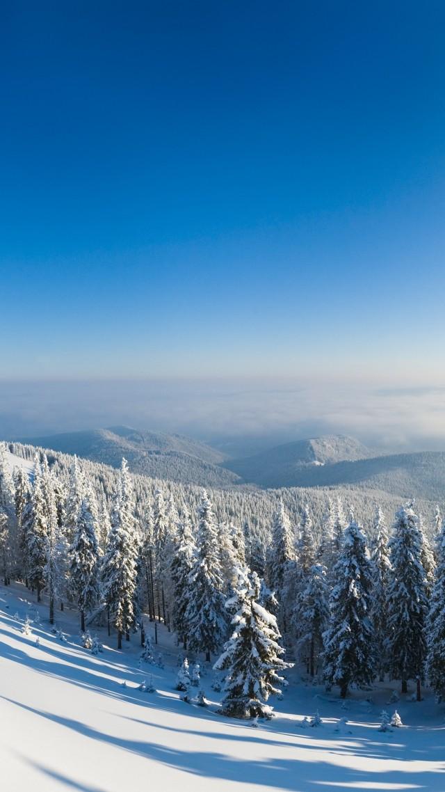 Wallpaper Winter Forest 5k 4k Wallpaper Mountain Sun Snow Fir Trees Nature 580