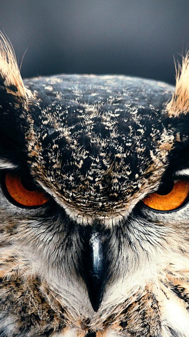 Wallpaper Owl 4k Hd Wallpaper Eyes Wild Nature Gray