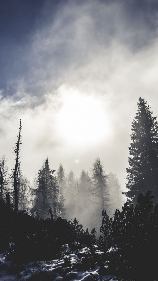 Wallpaper Forest 5k 4k Wallpaper Trees Pines Clouds
