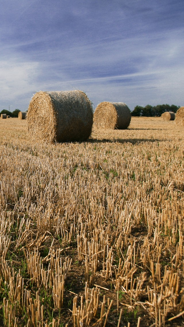 Faversham, 5k, 4k wallpaper, Kent, England, hay, field, meadows, sky (vertical)