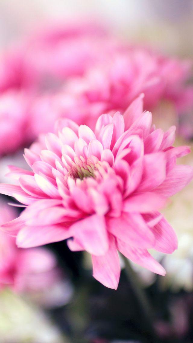 Фото сборник цветы