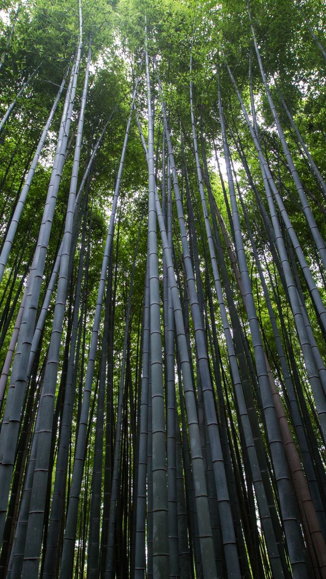 Forest, trees, green, bamboo