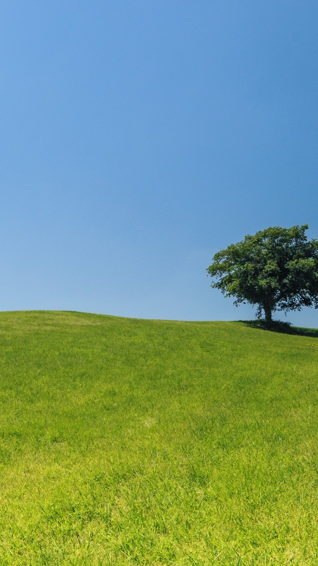Meadows, 4k, 5k wallpaper, trees, sky (vertical)