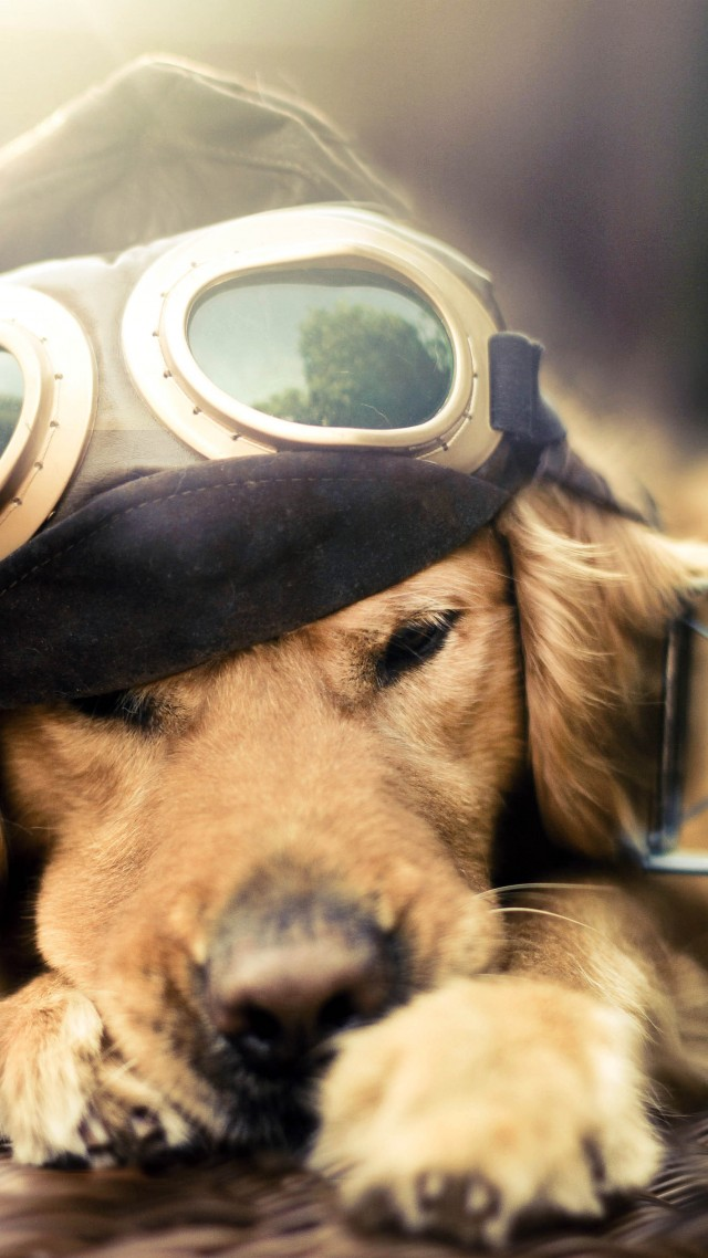 Puppy, Dog, plane, glasses, pet (vertical)