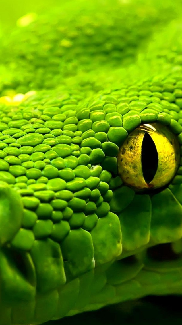 Snake, green, reptile, eyes (vertical)