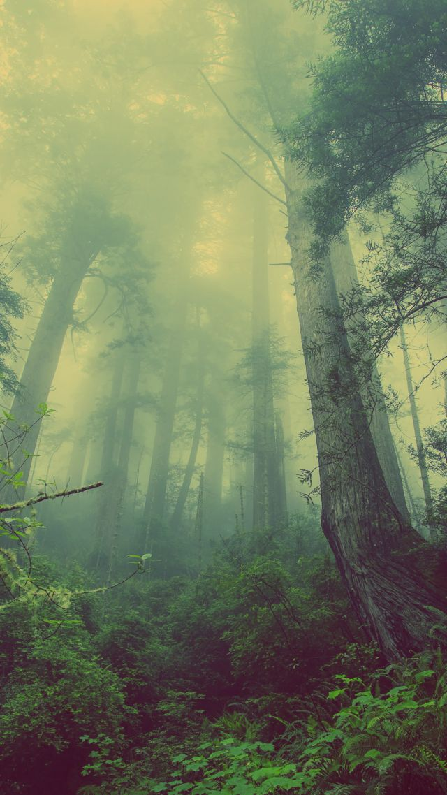 forest, 4k, 5k wallpaper, green, fog, threes (vertical)