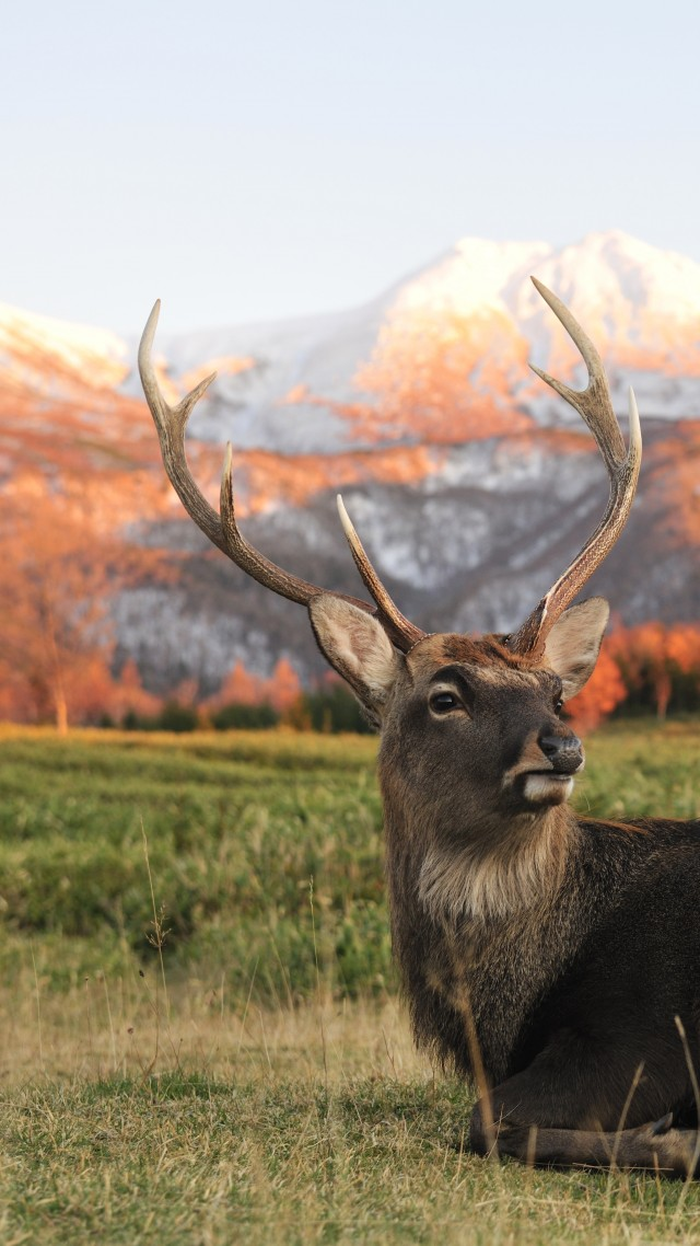 Deer, New Zeland, mountains (vertical)
