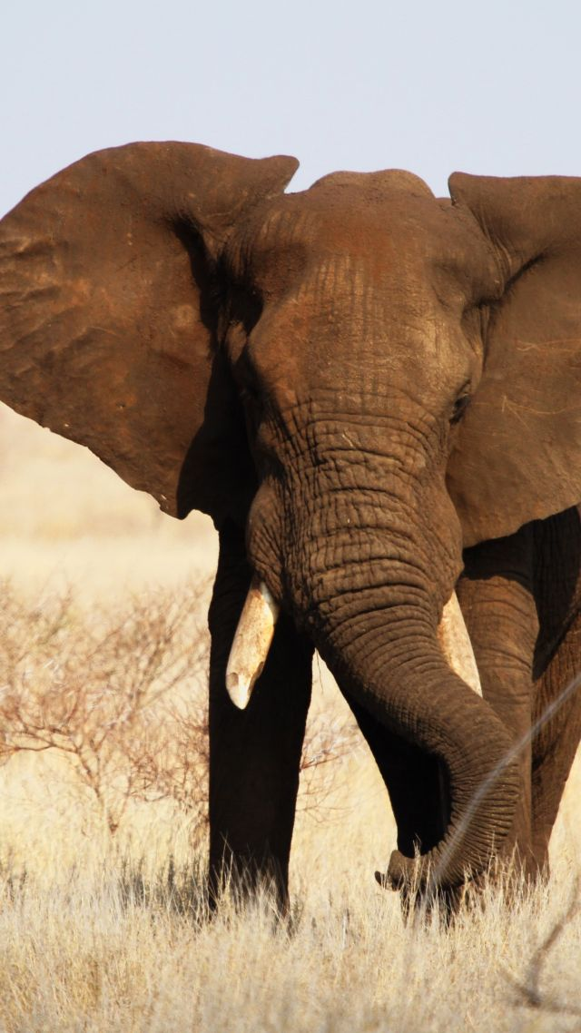 Wallpaper Elephant Kruger National Park Africa Wildlife
