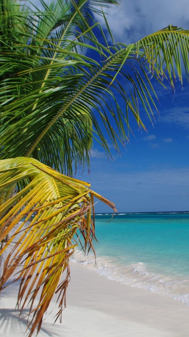 Wallpaper Flamenco Beach, Culebra, Puerto Rico, palms ...