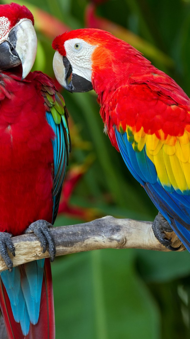 parrot, plumage, branch, exotic, red, blue (vertical)