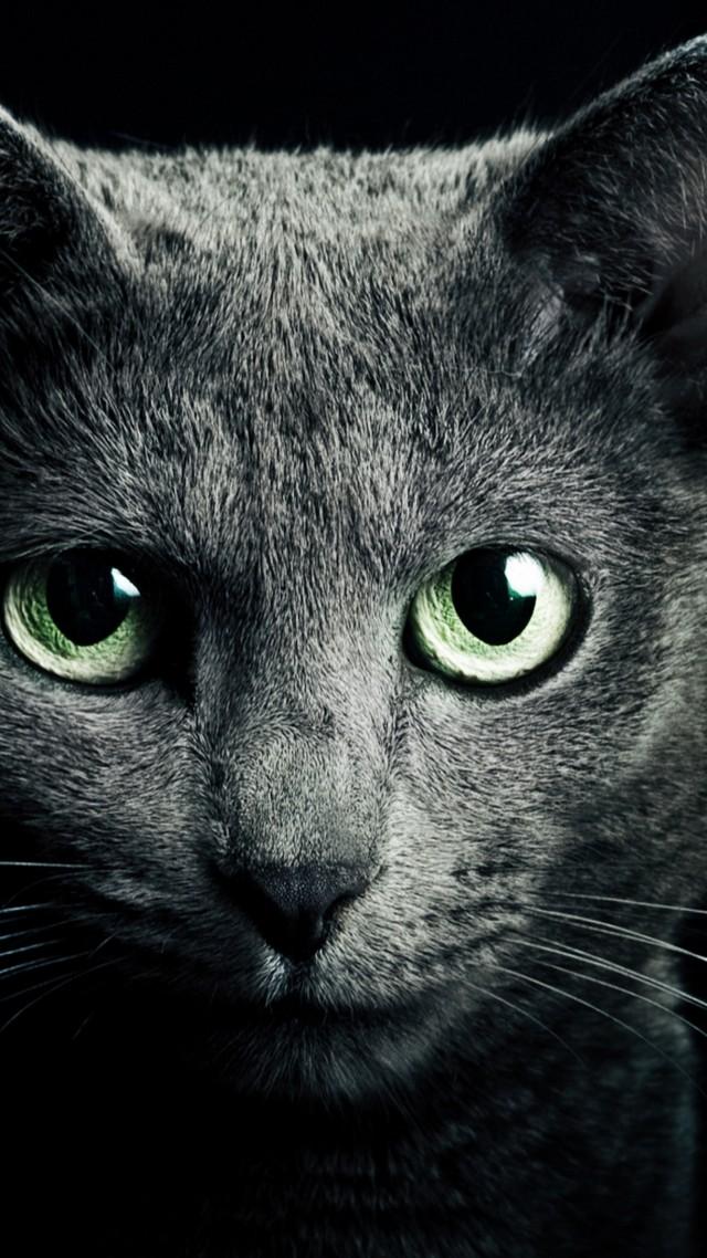 Wallpaper Kitty Kitten Cat Eyes Cute Black Animals 8988