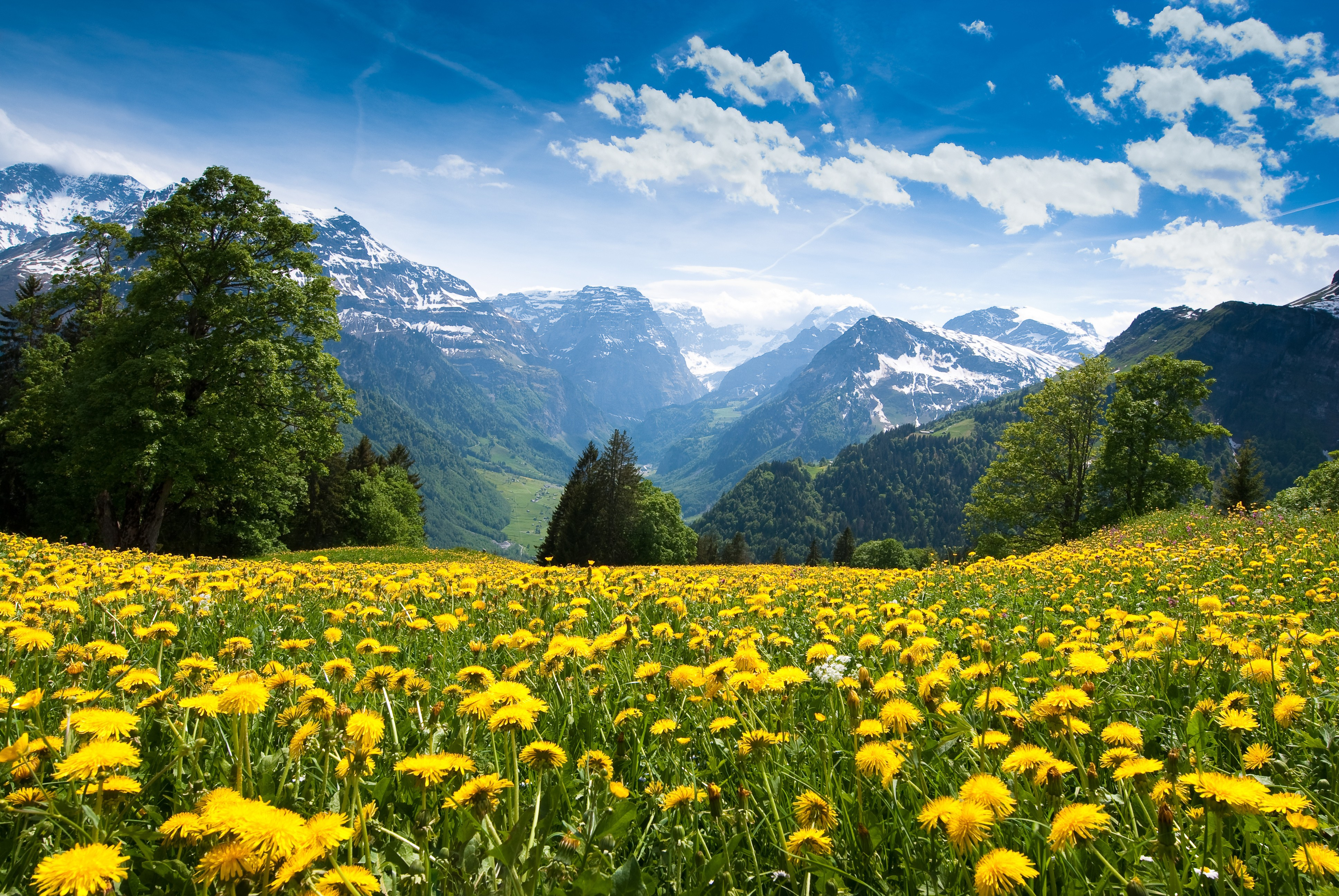 wallpaper alps, 4k, hd wallpaper, france, mountains, dandelion