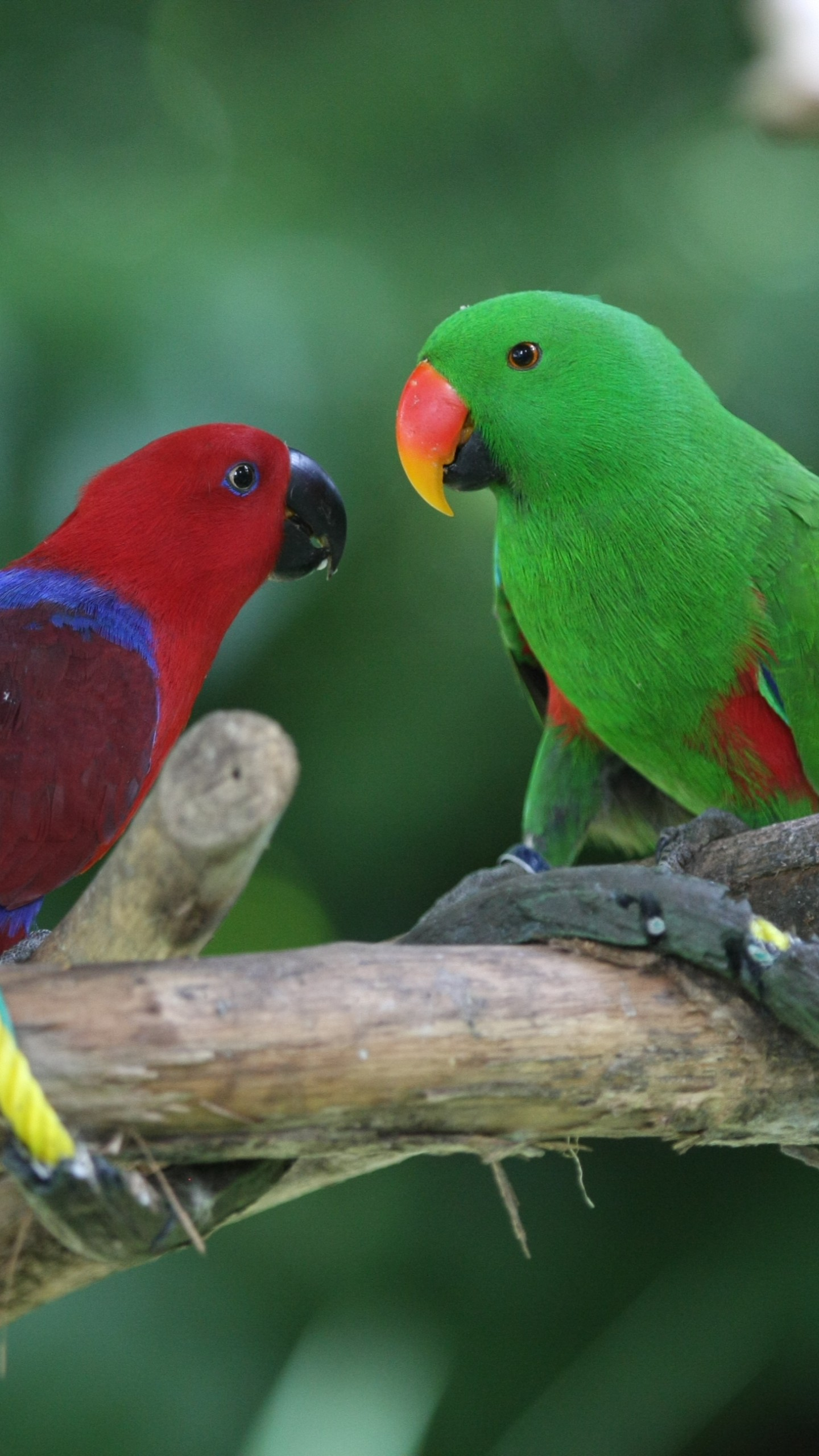 Wallpaper Amazon Parrot Antilles Island Bird Green Red