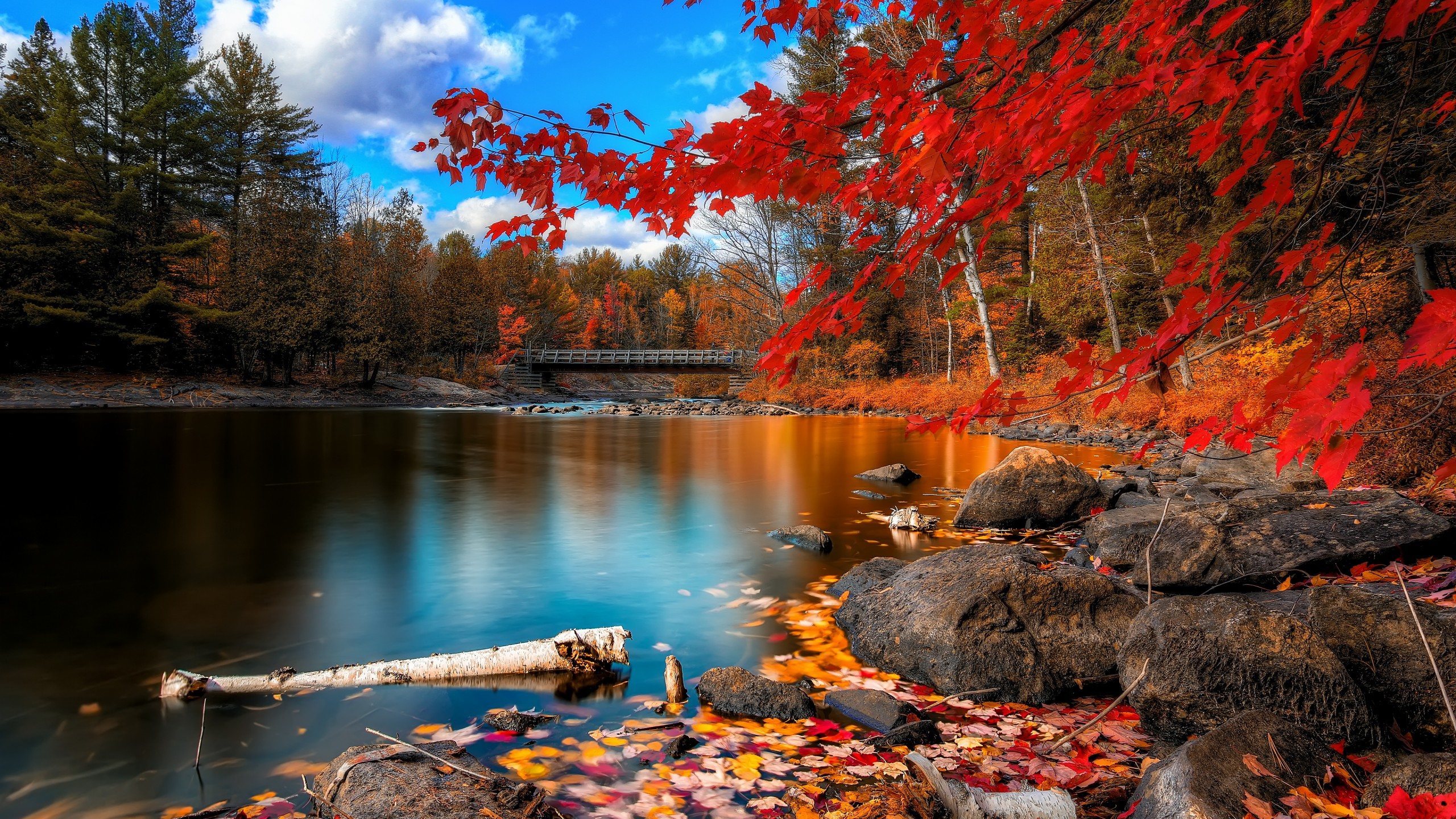Wallpaper Autumn Forest 4k HD Leaves Trees Lake