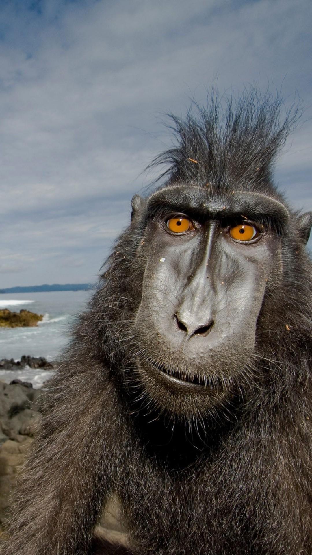 Wallpaper baboon, monkey, cute animals, funny, Animals #4502