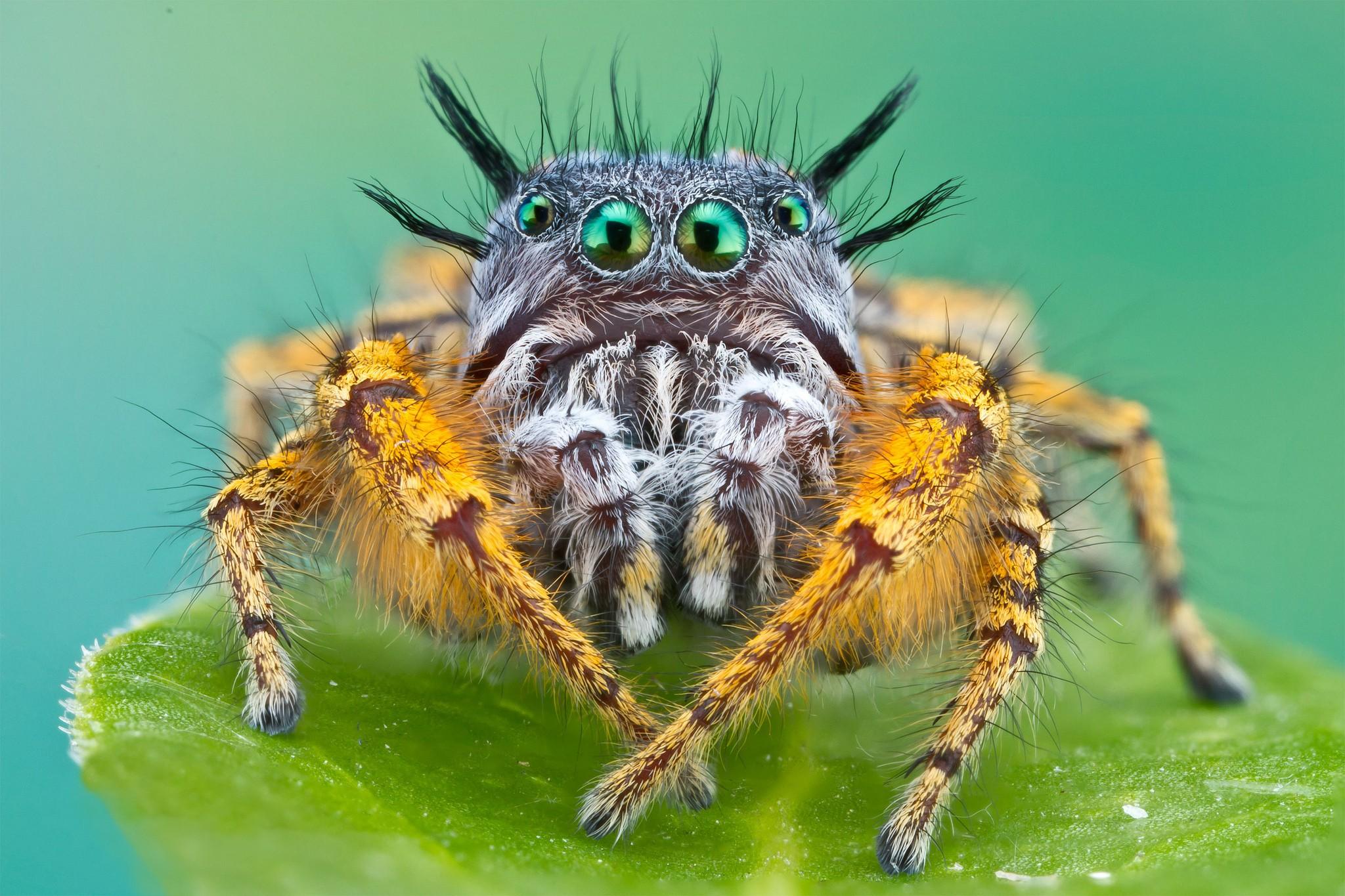 Spider Desktop Wallpaper