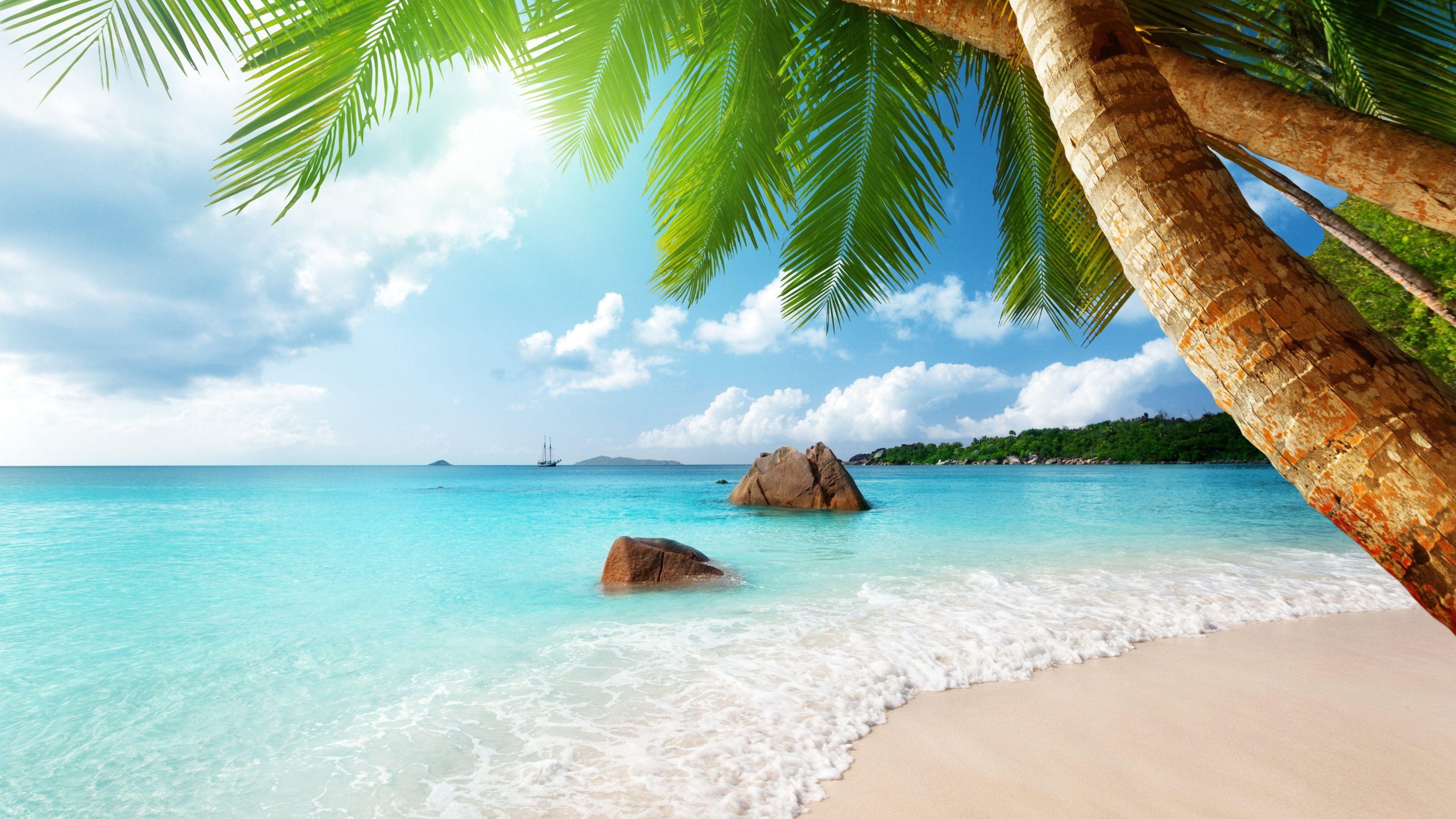 Hd Tropical Island Beach Paradise Wallpapers And Backgrounds: Wallpaper Beach, 5k, 4k Wallpaper, Palm. Ocean, Nature #7037