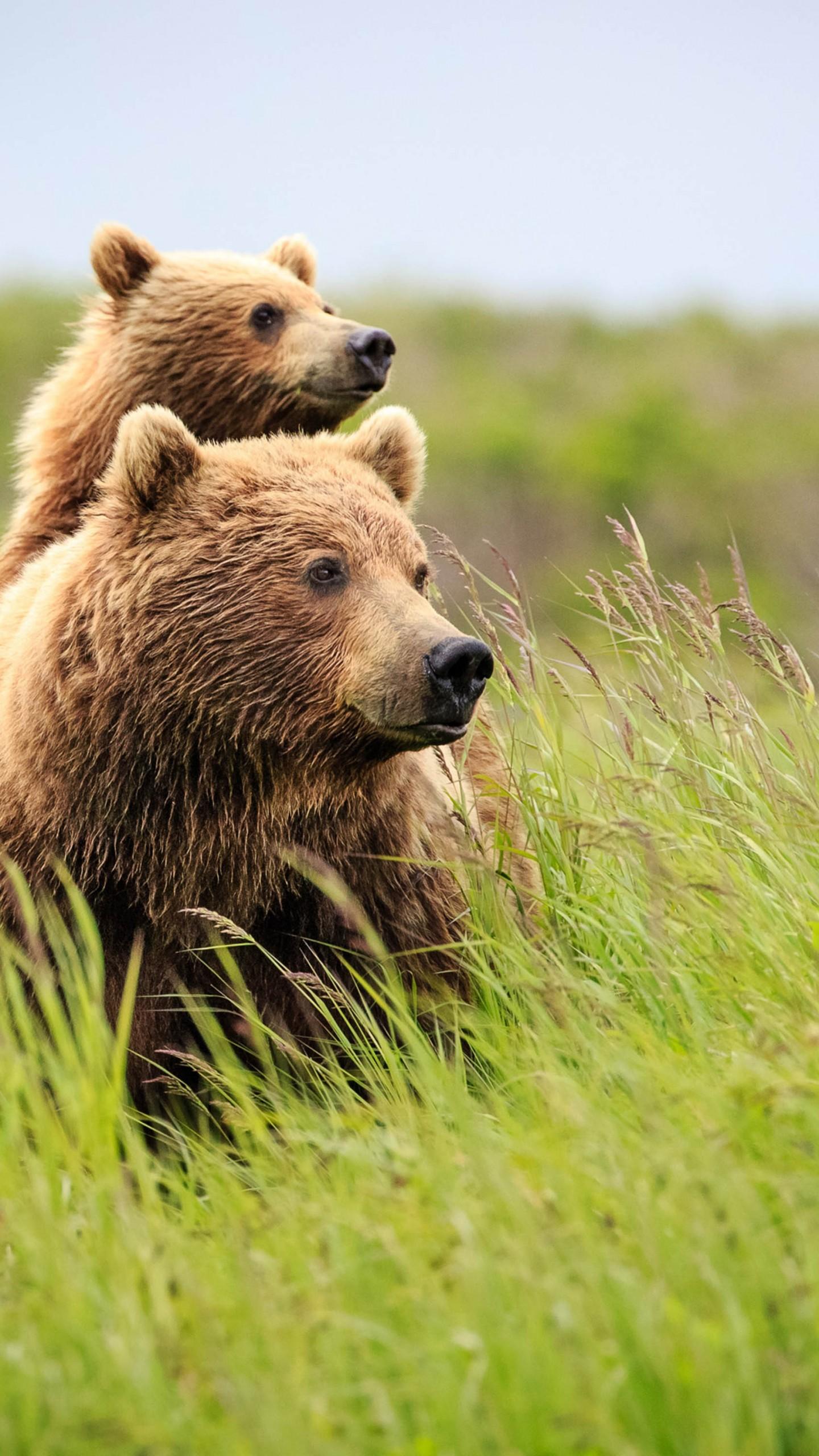 Wallpaper Bear Cute Animals Grass 4k Animals 16105
