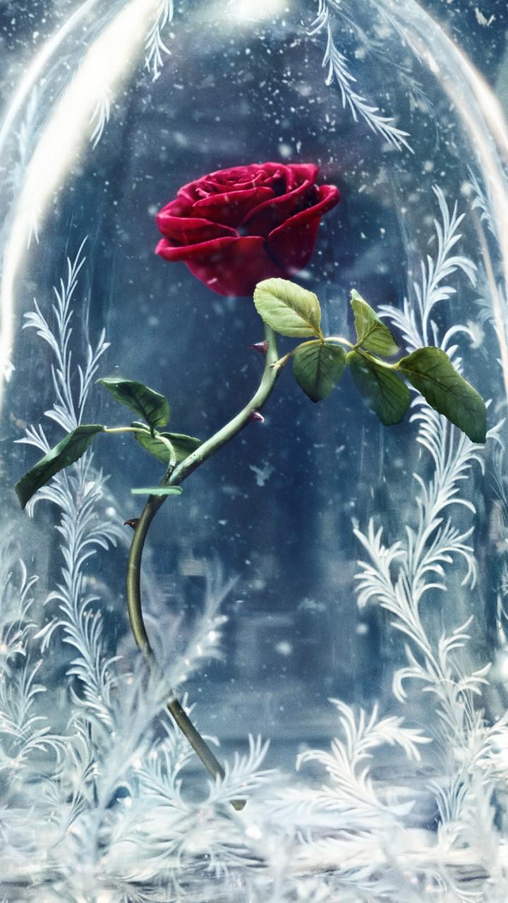 Wallpaper Beauty And The Beast Glass Rose Best Movies Movies