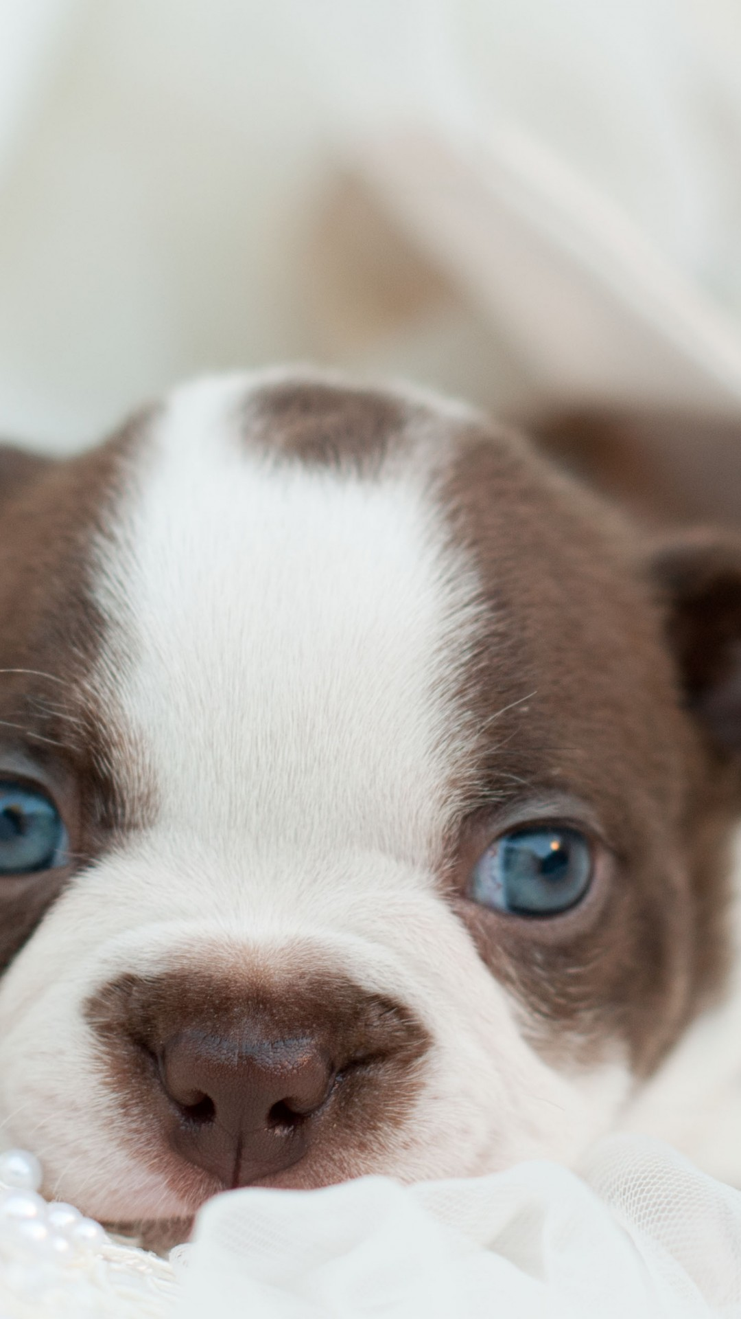 Animals And Pets Puppies