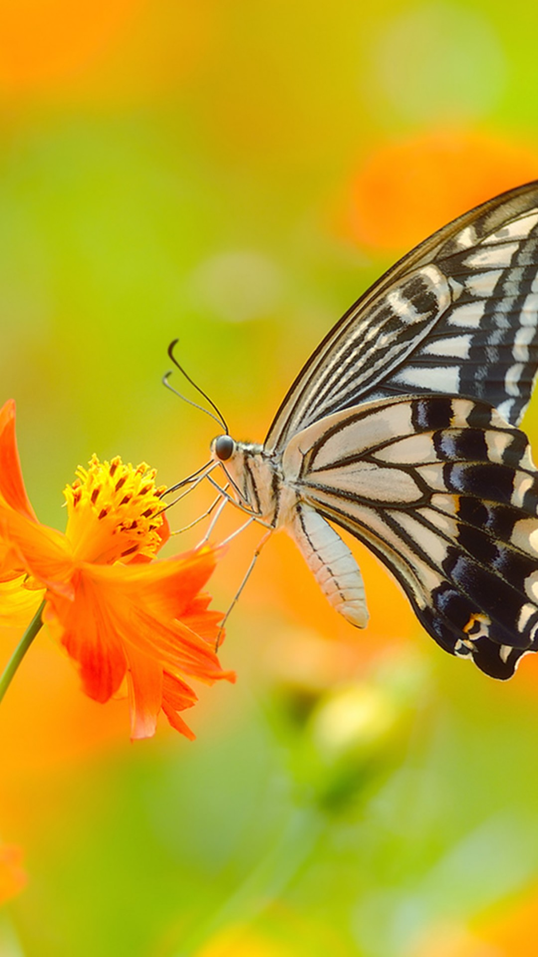 Wallpaper Butterfly 5k 4k Wallpaper Colorful Flowers Yellow Insects Animals 932