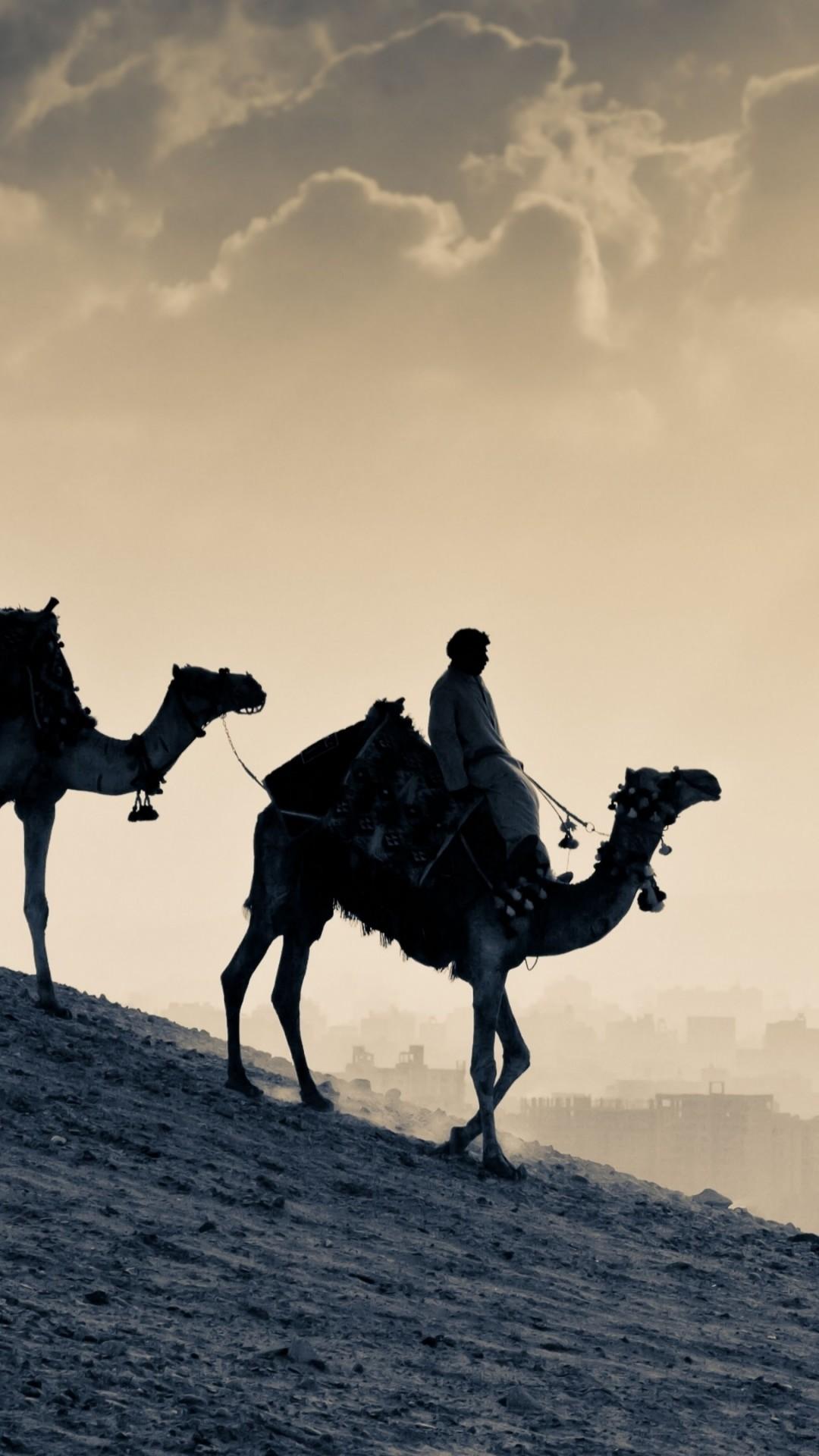 Wallpaper Camel, desert, sunset, Animals #5382