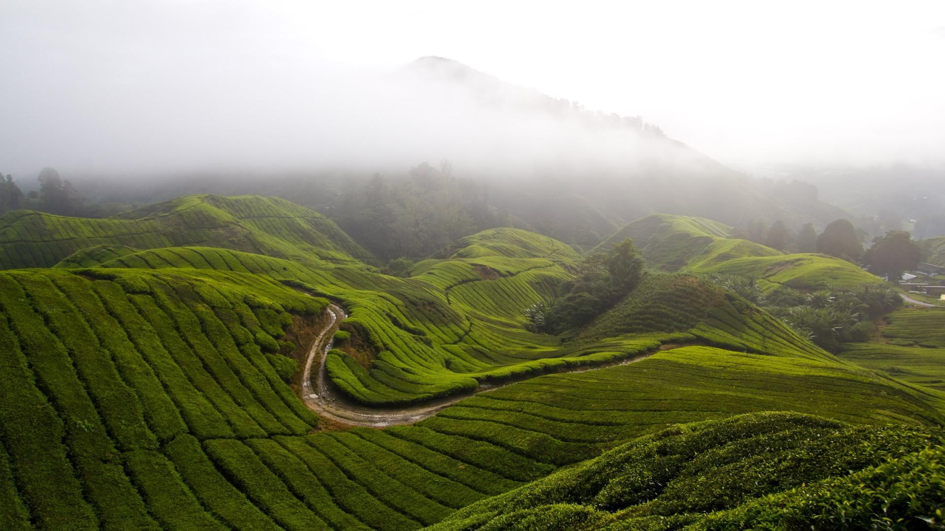 Toyota Ft 86 >> Wallpaper Cameron Highlands, 5k, 4k wallpaper, Malaysia, meadows, fog, sky, Nature #6126