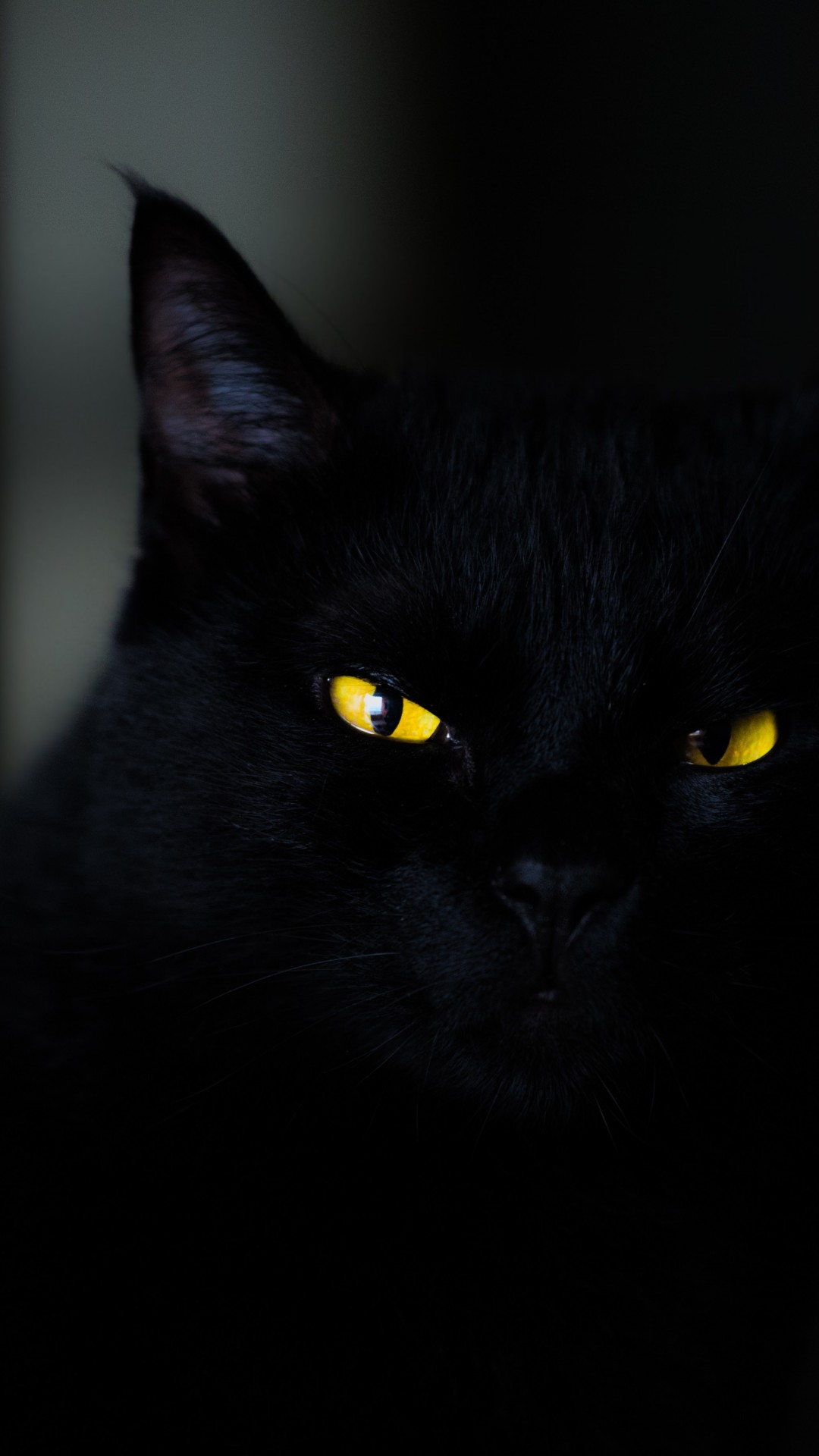 Wallpaper Cat Black Yellow Eyes 4k Animals 19934