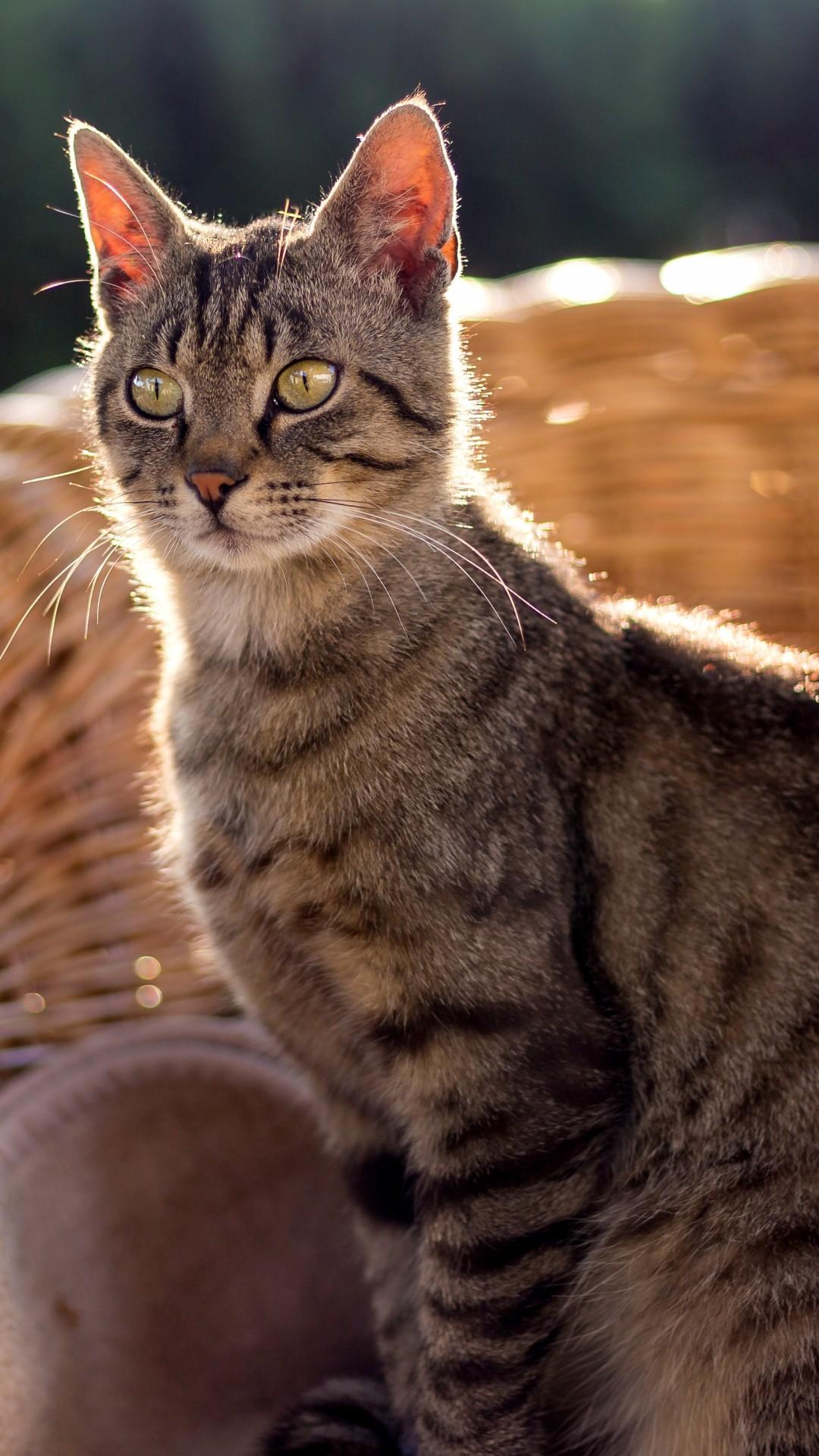 Wallpaper Cat, grey, 4K, Animals #19406