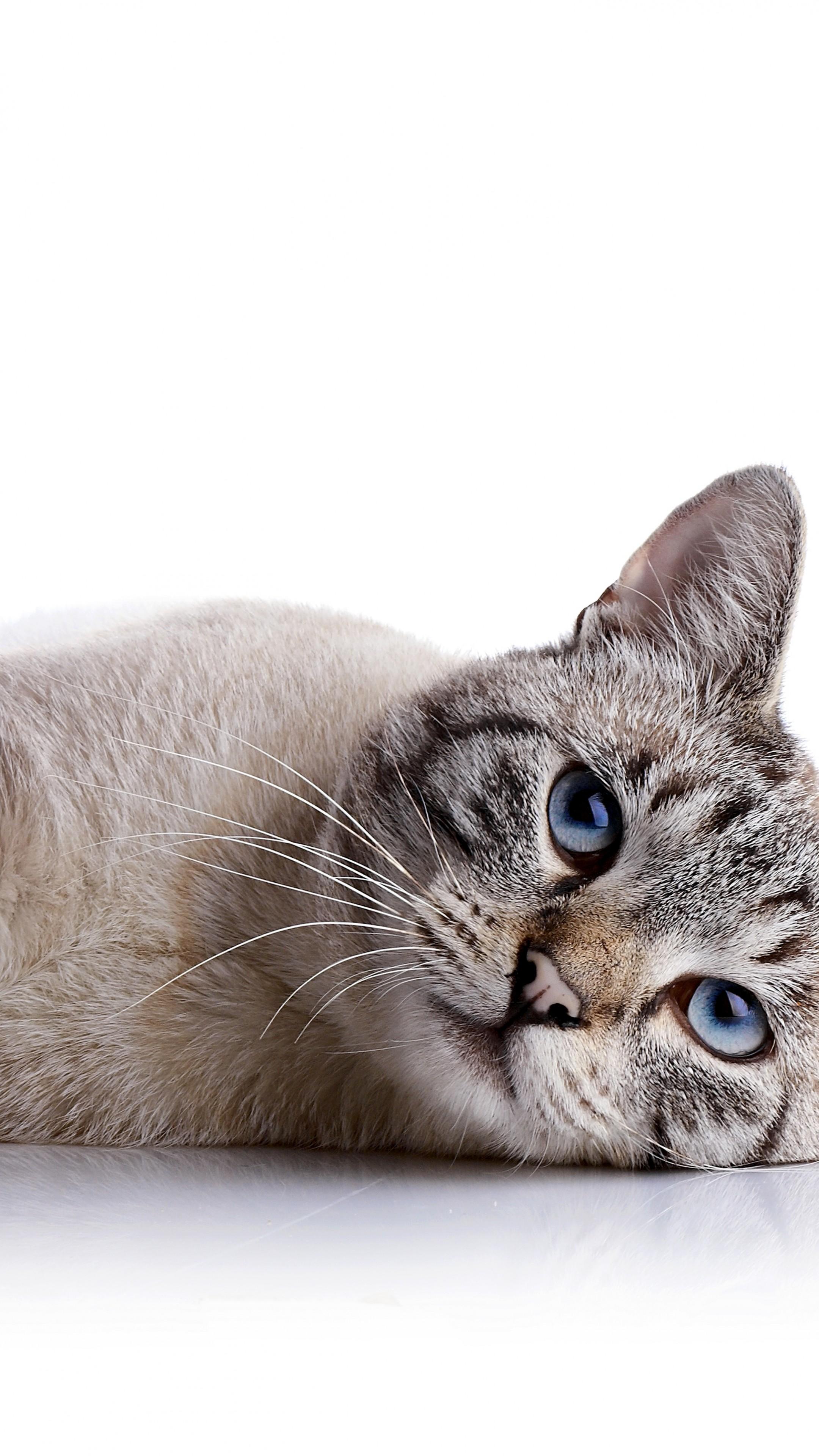 Pet Quotes Cat