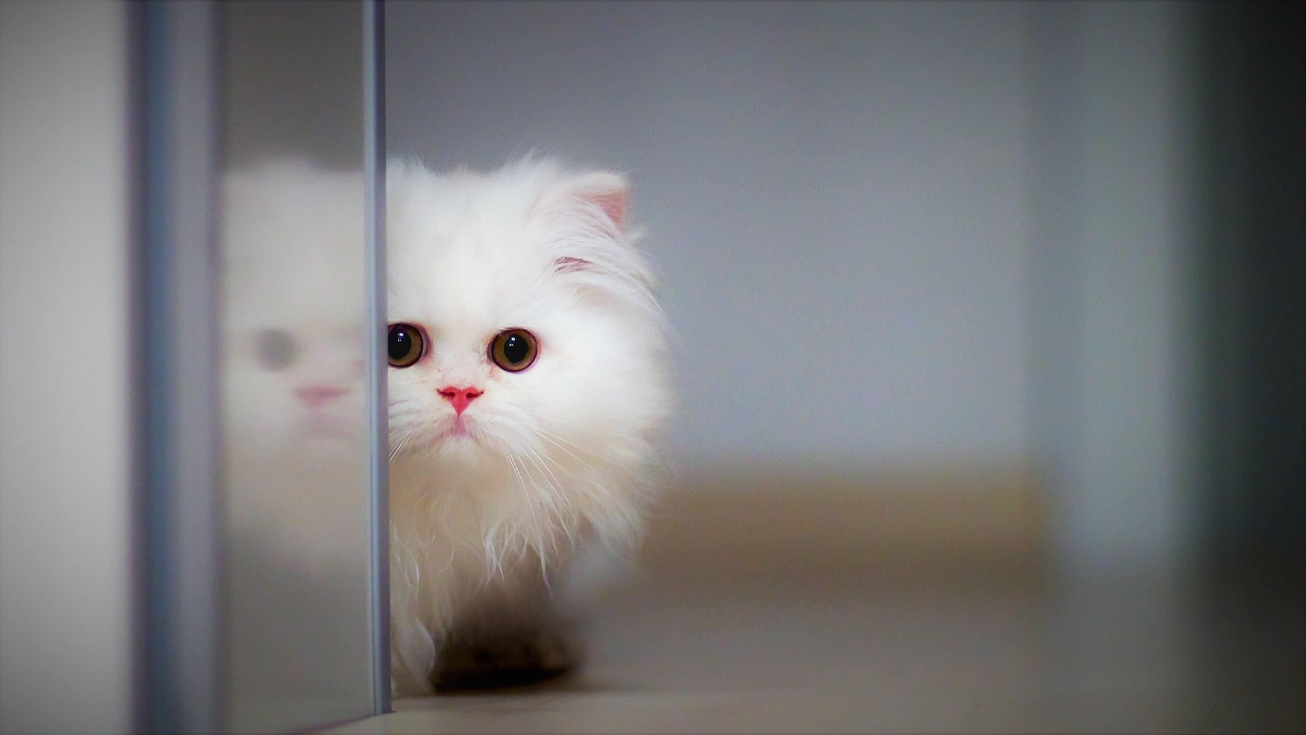 Funny Dog Wallpaper Wallpaper Cat, kitten,...