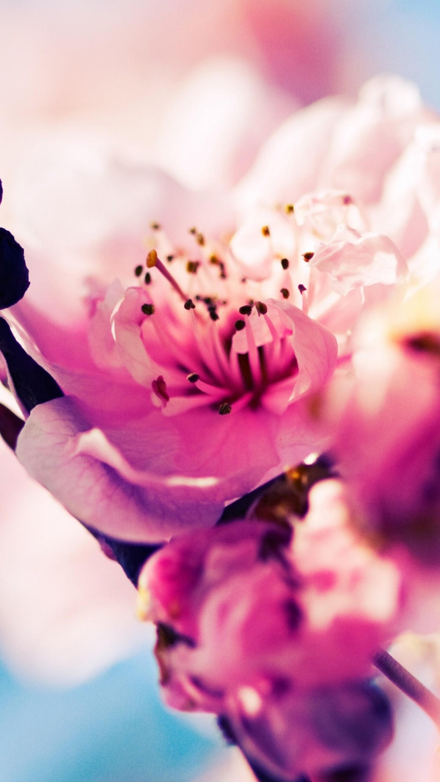 Wallpaper cherry 4k 5k wallpaper blossom branch - Pink wallpaper 4k ...