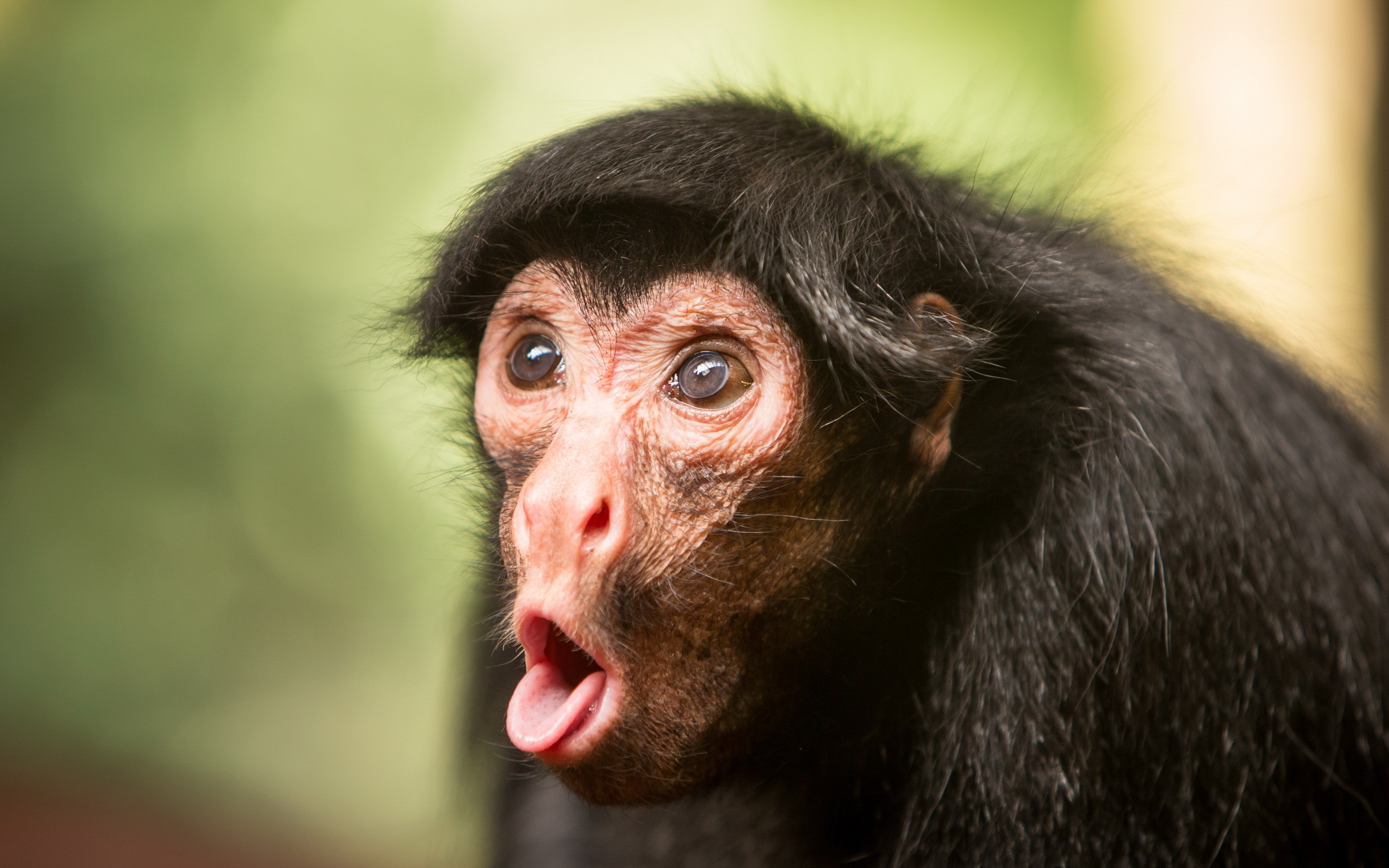 Wallpaper Chimpanzee Monkey Cute Animals Funny 4518 Bring Some HD Wallpapers Into Your Life With WallpapersHome