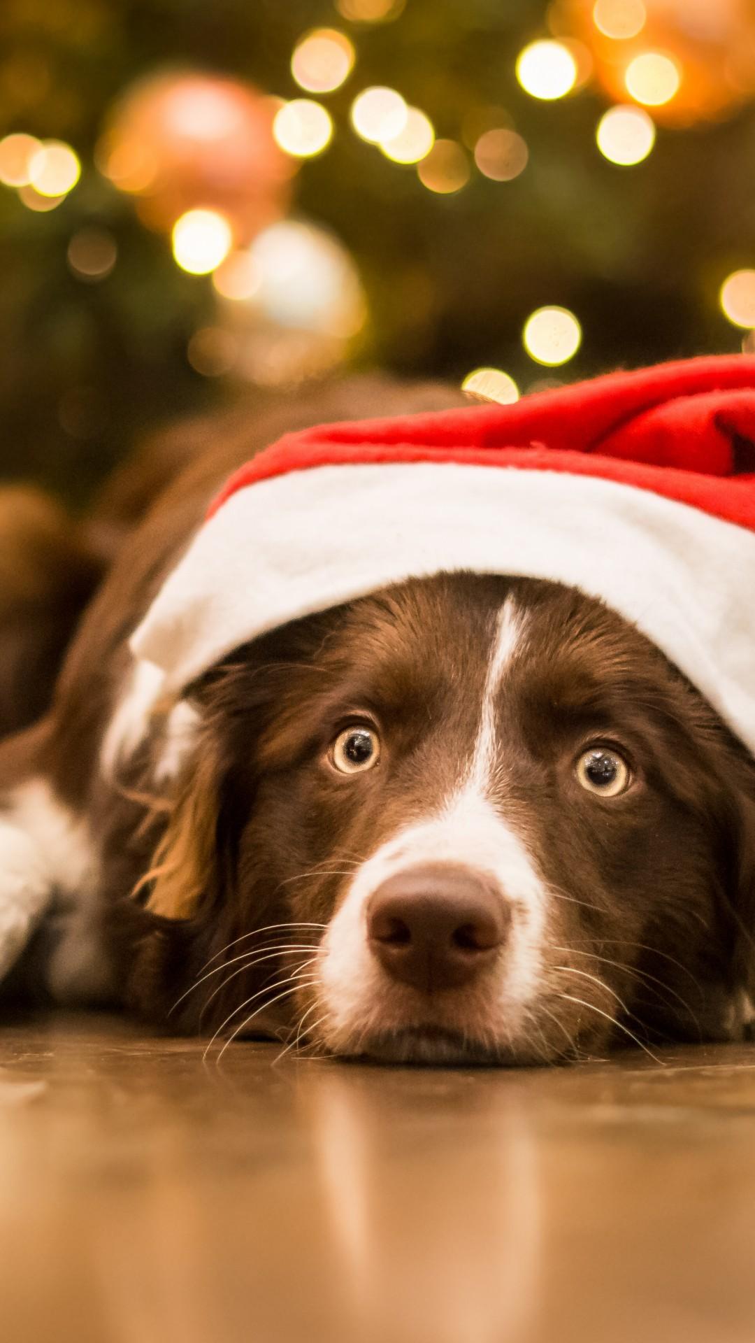 Wallpaper Christmas, New Year, dog, cute animals, 5k ...